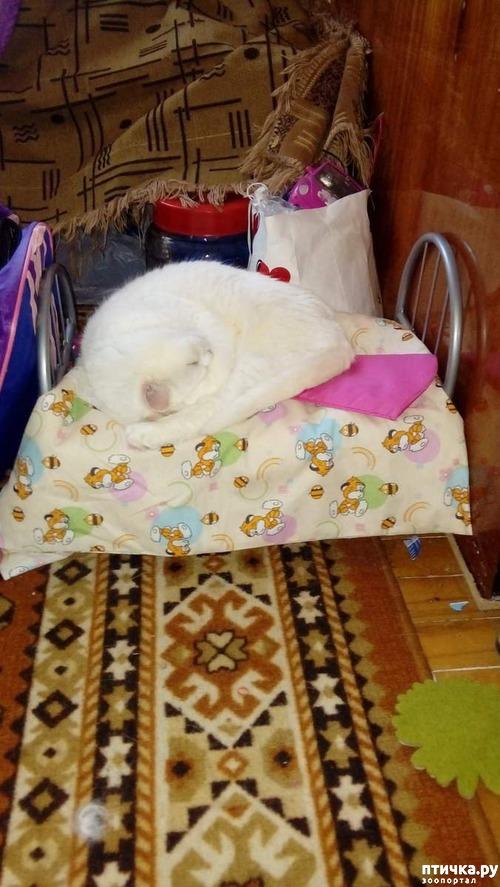 фото 10: Знакомство! наш кот Арсений. Много фото
