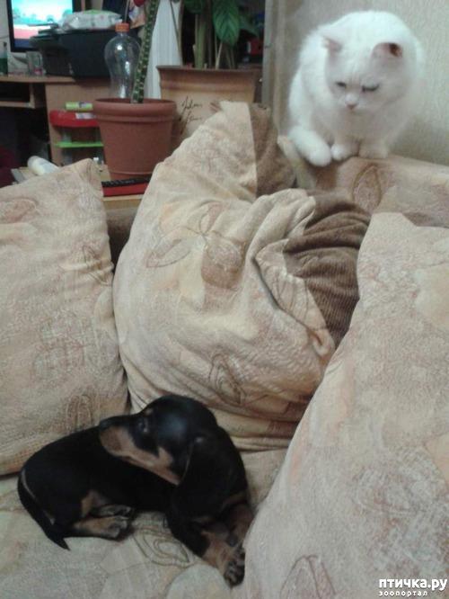 фото 9: Знакомство! наш кот Арсений. Много фото