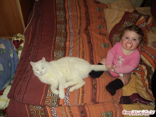 фото 7: Знакомство! наш кот Арсений. Много фото