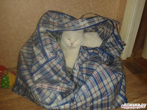 фото 5: Знакомство! наш кот Арсений. Много фото