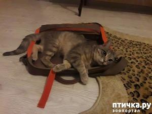 фото: Мой любимый Марсэль... котобук