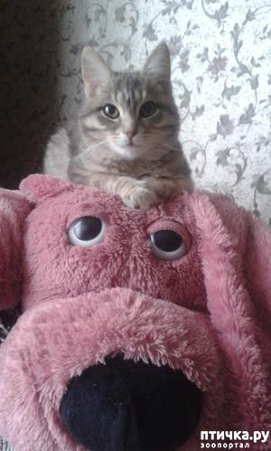 фото: Мой любимый Марсэль... очень любит спать на мягких игрушках...