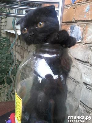 фото: Компот с котом