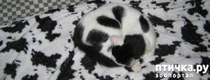 фото: Найдите котика