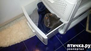 фото: Мой кот-большой любитель шкафов, тумбочек, в общем тех мест, где немного тесновато...