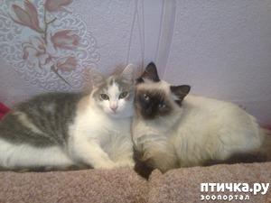 фото: Мои красавчики!!!