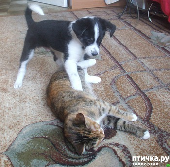 фото: Как разделить кормление кошки и собаки?