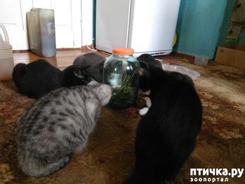 фото: Бойтесь своих желаний)))