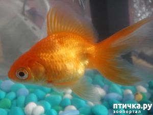 """фото: Моя """"Золотая"""" красавица"""