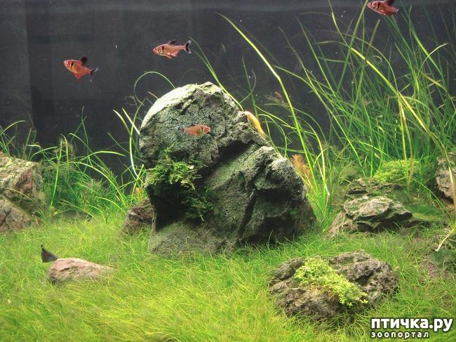фото 3: Аквариумное царство Аптекарского огорода