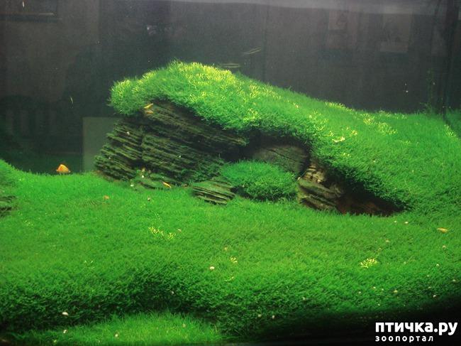 фото 6: Аквариумное царство Аптекарского огорода