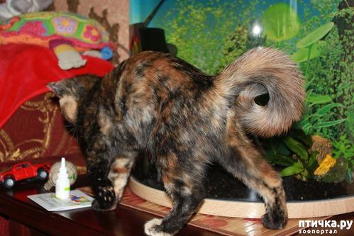 фото 1: Моя кошка метит (