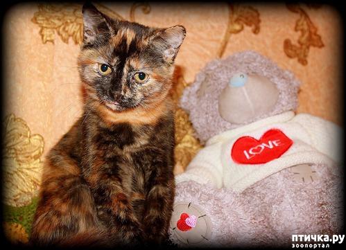фото 2: Моя кошка метит (