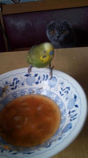 фото: Любитель поесть из тарелки