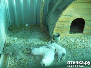 фото: Кролик или не кролик?