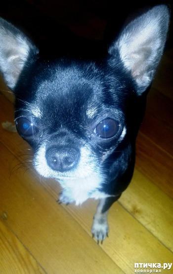 фото: И стало у меня семь собак