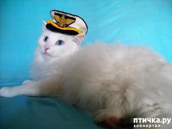 фото: Тимон - капитан речного флота.