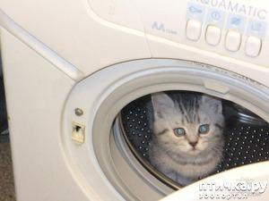 фото: В космонавты я б пошел, пусть меня научат...