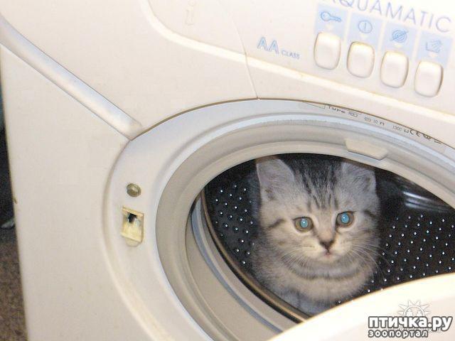 фото 1: В космонавты я б пошел, пусть меня научат...