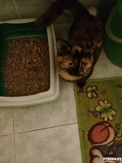 фото 1: Опрос. Кошачьи наполнители.