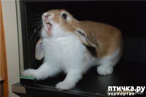 фото: О таких разных кроликах