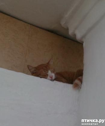 фото: Купание кошек и котов. За и против.