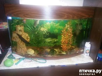 фото: Кто питается мертвыми рыбками?