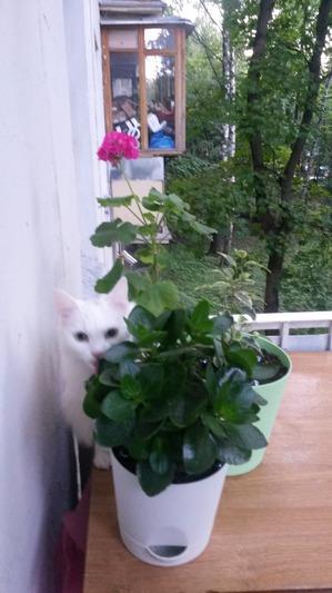 фото: Любимые цветы