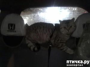 фото: А я сяду в кабриолет