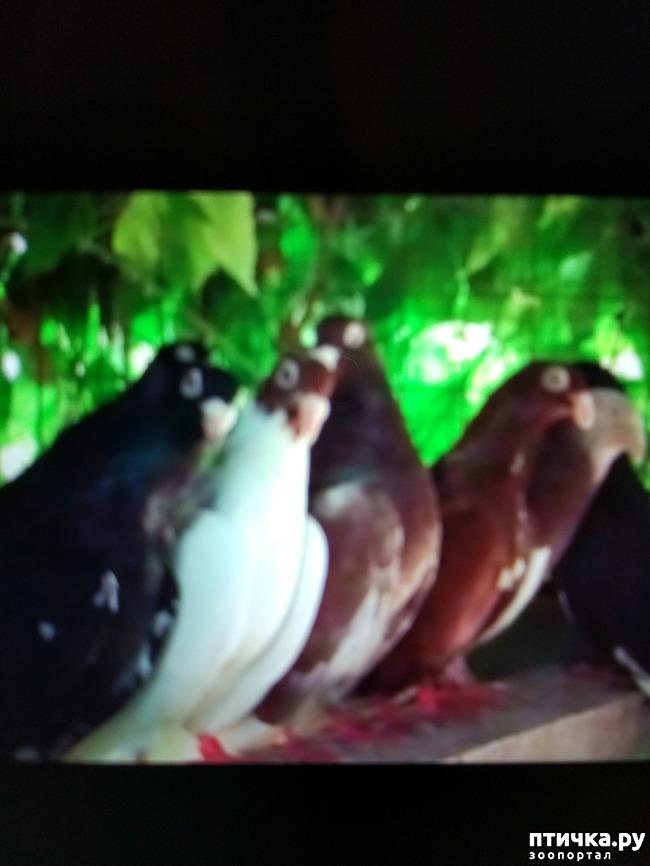фото 2: Любовь и голуби