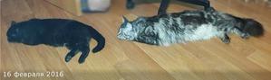 фото 3: Рота подъём!!! Или как нас укладывают спать питомцы.