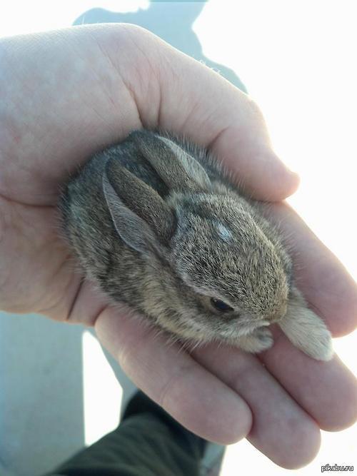 фото 1: Дети и кролики