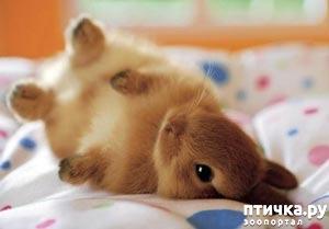 фото: Дети и кролики
