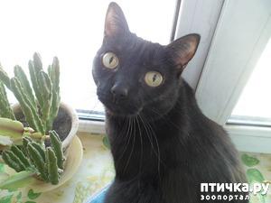 фото: Самые привычные места обитания наших любимых кошачьих)))