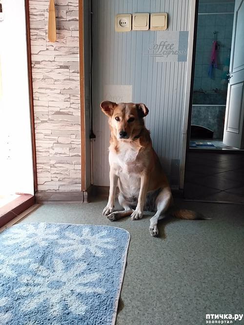 фото 4: Мои собаки