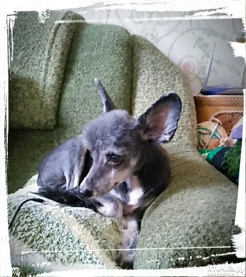 фото 1: Мои собаки