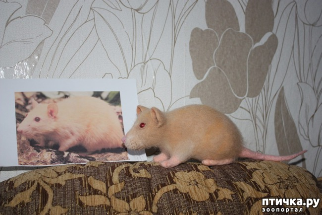фото 5: Продолжаю про животных, которых люблю и сделаю)))