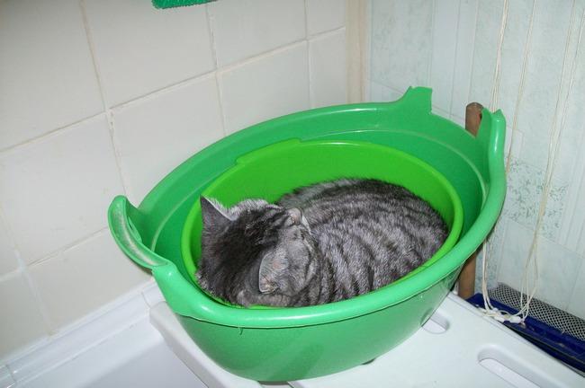 фото 2: А мы спим вот так