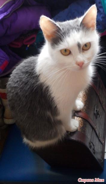 фото 1: Вспомнила о том как у меня появилась чуда кошка в феврале 2016