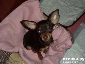 фото: Моя собачья гадость)))