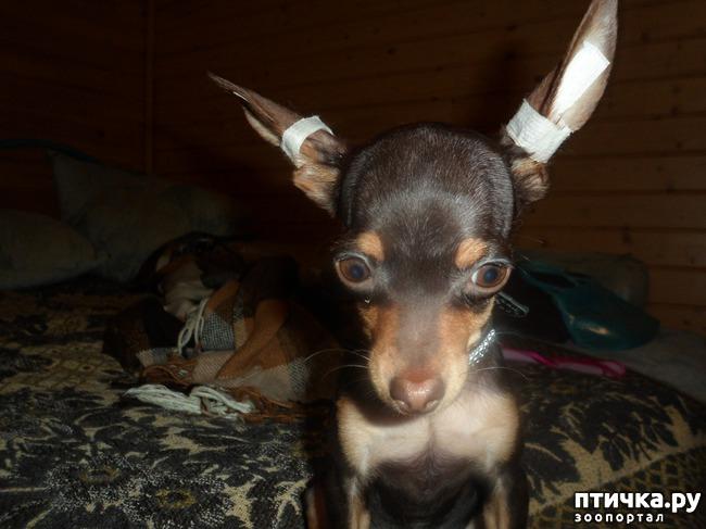 фото 2: Моя собачья гадость)))