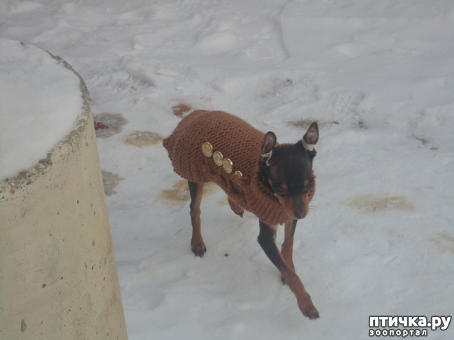 фото 3: Моя собачья гадость)))