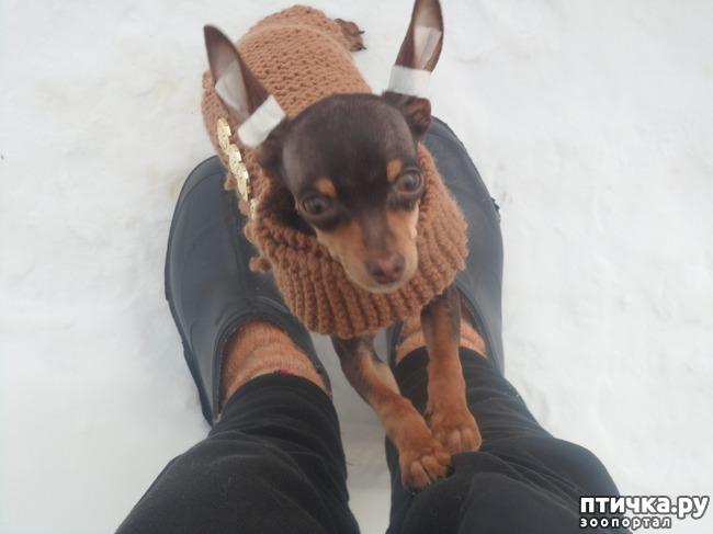фото 4: Моя собачья гадость)))