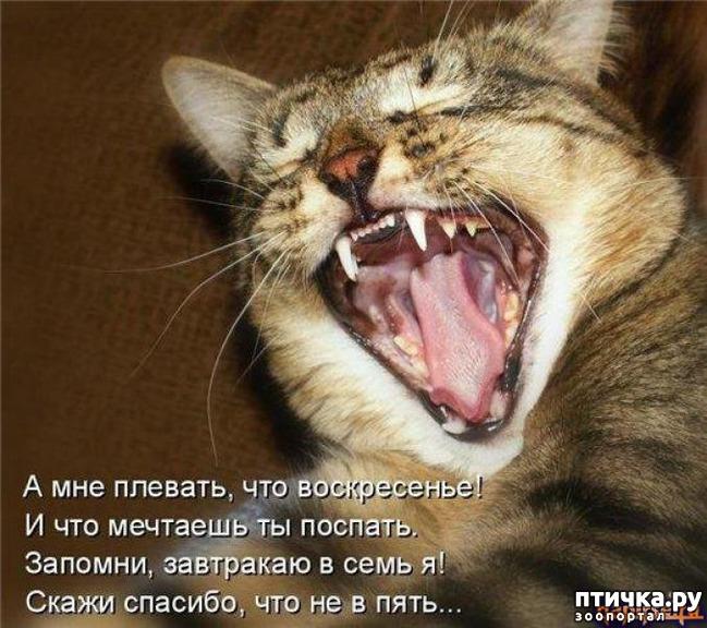 фото 7: