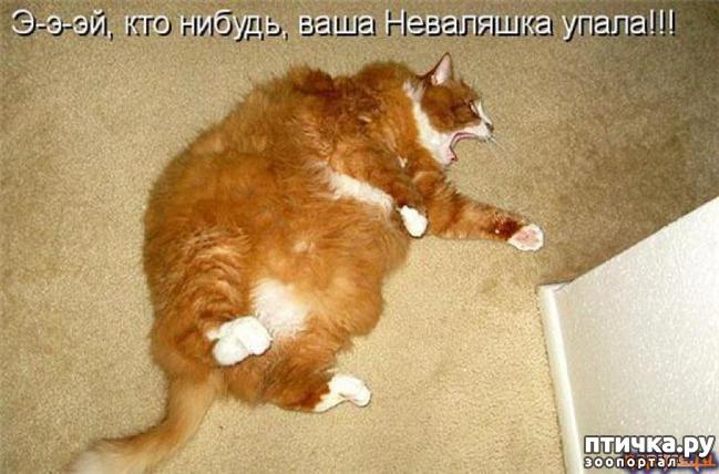 фото 8: