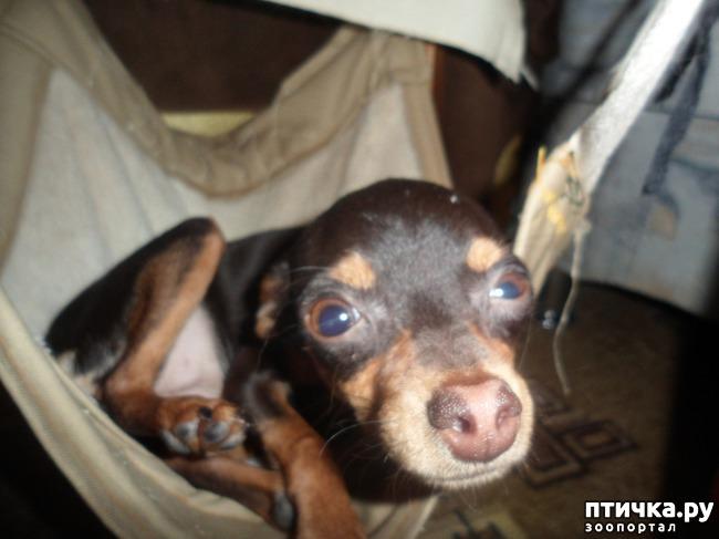 фото 6: Моя собачья гадость)))