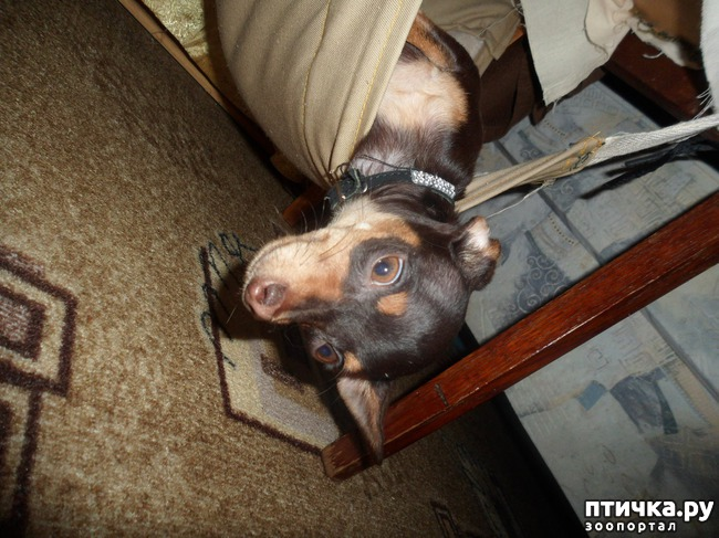 фото 8: Моя собачья гадость)))