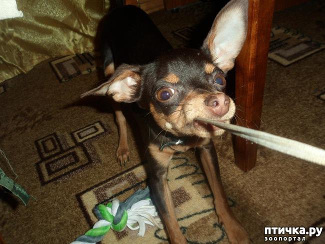 фото 15: Моя собачья гадость)))