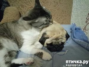 фото: Спим.