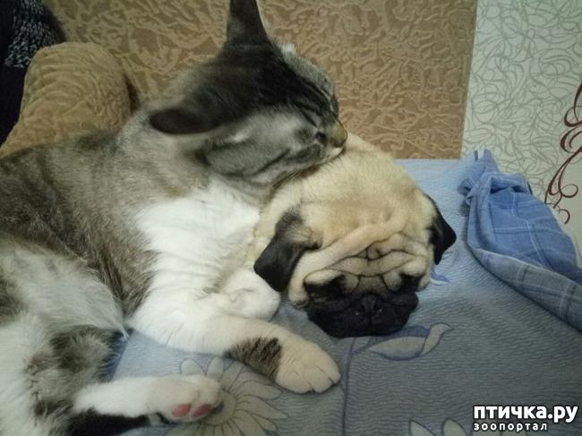 фото 1: Спим.